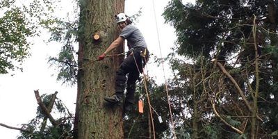 We fully assess the unique risks posed by each individual work site. Whether it simply be working on a tree in close proximity to a house or conservatory, working over a busy street, or near to power lines. We always take the necessary precautions in order to complete the job incident free. We can even arrange with local authorities to have power temporarily shut down, or traffic management put in place.